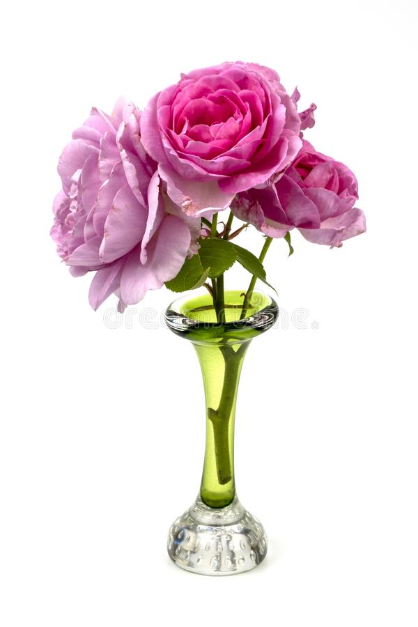 Pink roses in a green glass vase. Closeup of a a bunch of pink roses isolated on a white background sitting in a green vase royalty free stock images