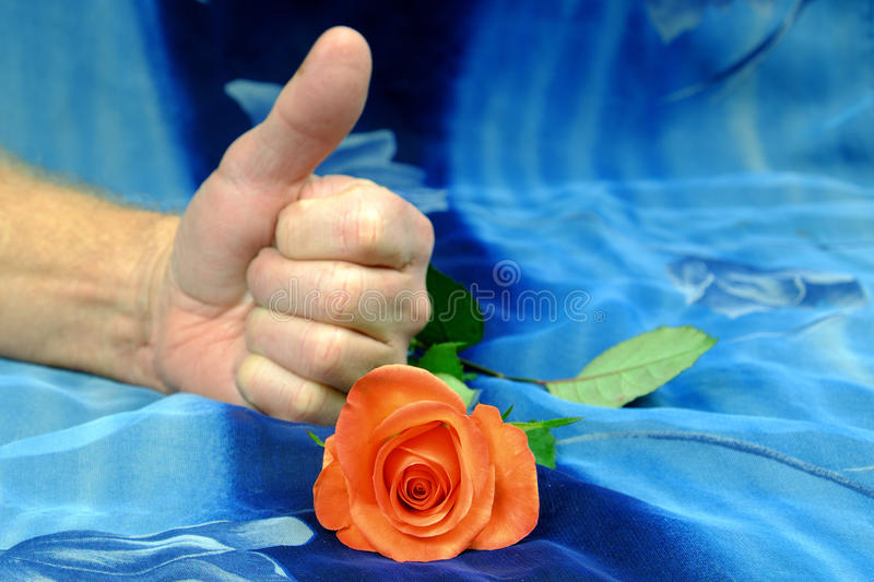 Pink roses and hand showing thumbs up on blue background stock images
