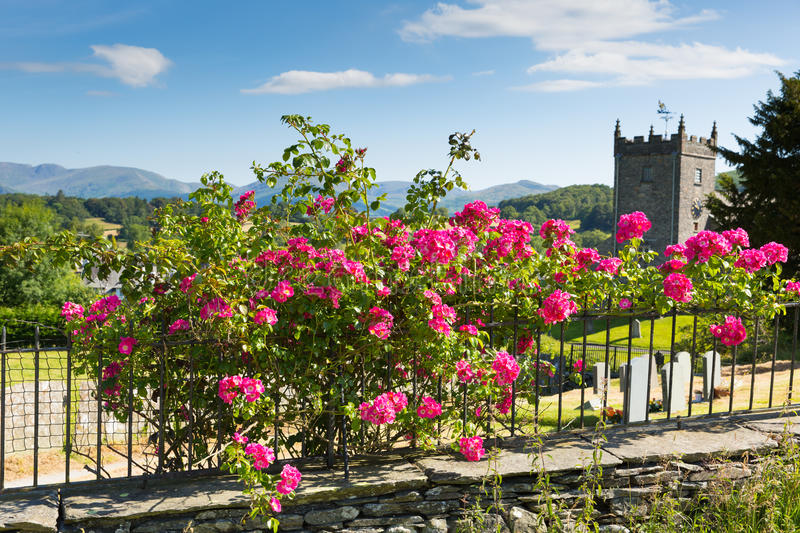 Pink roses and Hawkshead church Lake District England uk on a beautiful sunny summer day popular tourist village. Hawkshead Lake District National Park England stock photography
