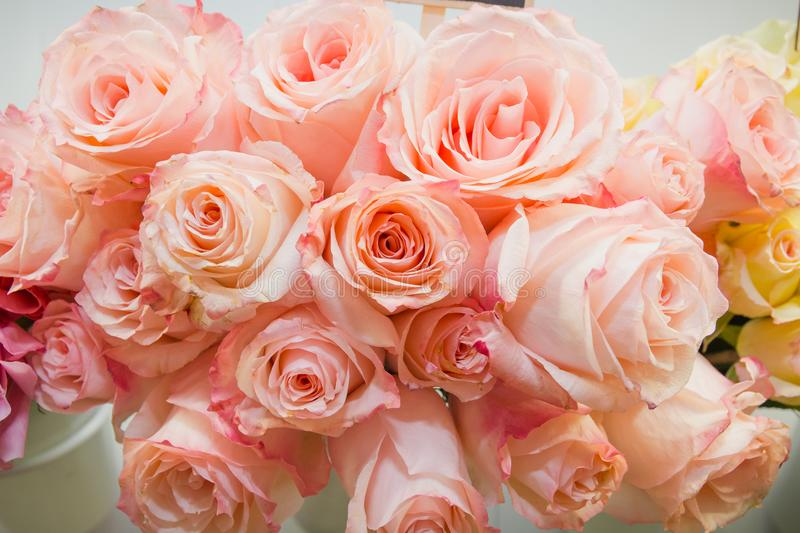 Pink roses. It is a lot of pink roses. royalty free stock photography