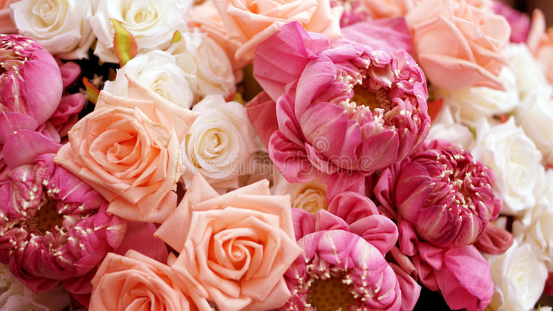 Pink roses and lotuses flower valentine background with copy spa royalty free stock photos