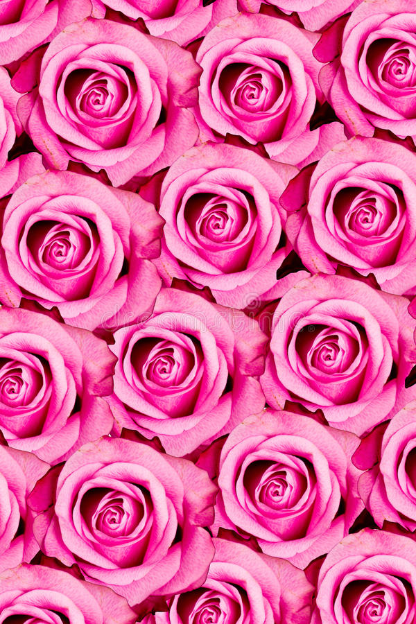 Download Pink roses pattern stock image. Image of decorative, decoration - 29362981
