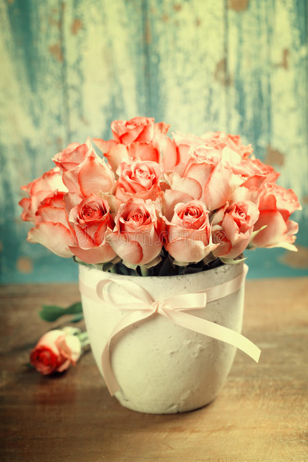 Pink roses in a pot royalty free stock photo