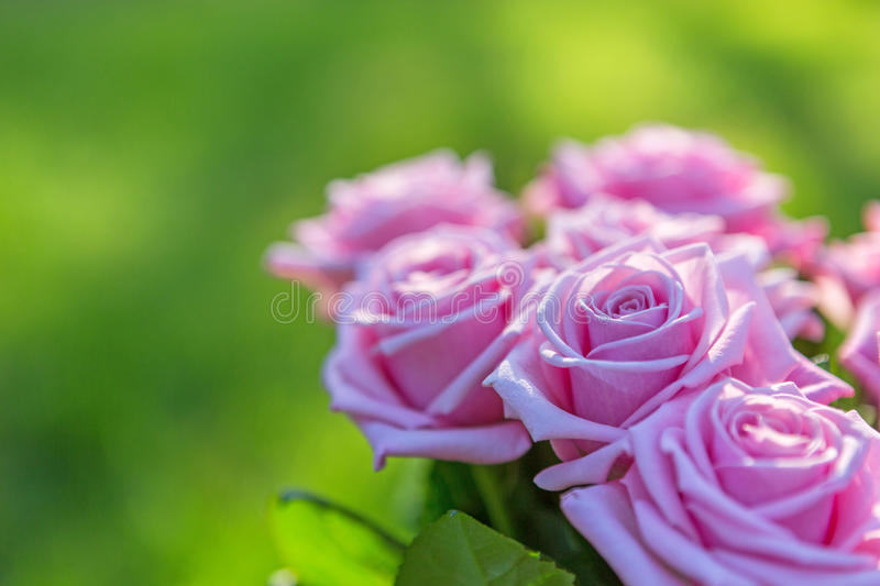 Download Pink roses bouquet stock photo. Image of romantic, spring - 41850356