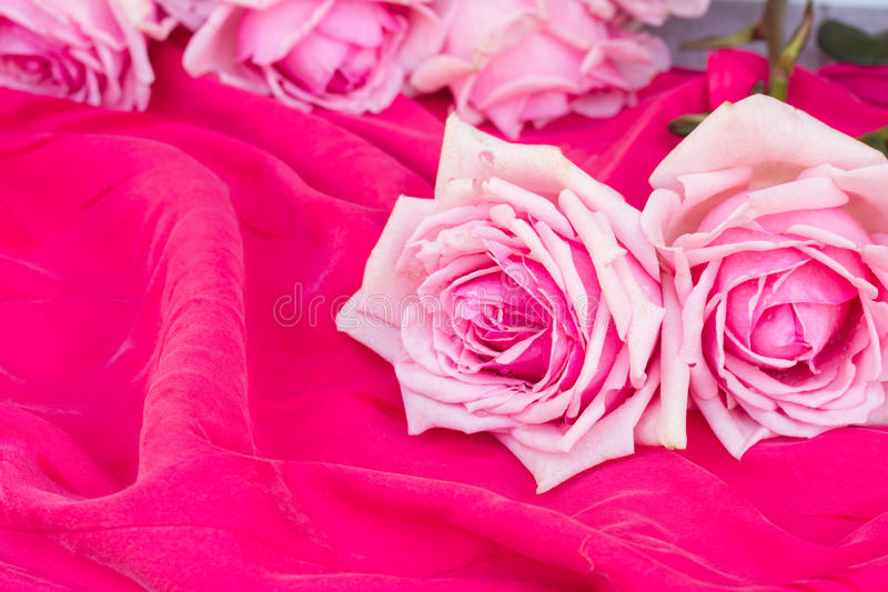 Pink roses on table. Blooming pink roses laying on soft silk background royalty free stock photo