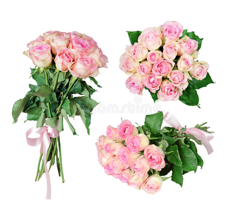 Pink roses on white background stock photo