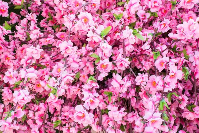 Pink sakura flower. Closeup pink fresh beautiful sakura flower stock images
