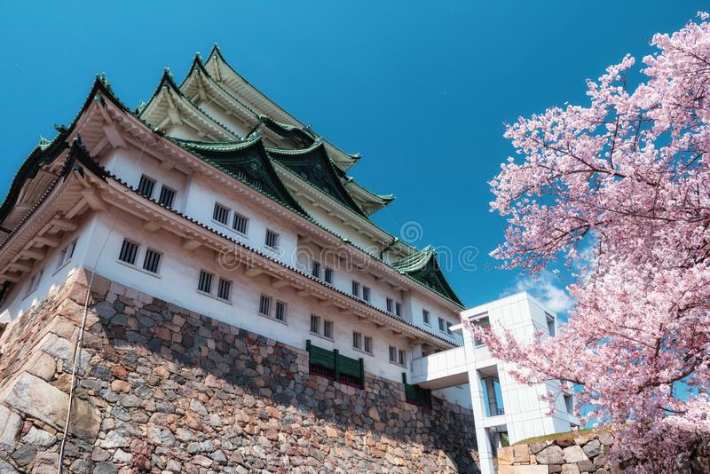 Pink sakura at Nagoya castle, Japan royalty free stock photo