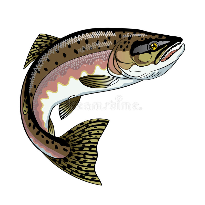 Pink Salmon. Vector drawing of fish pink Salmon vector illustration