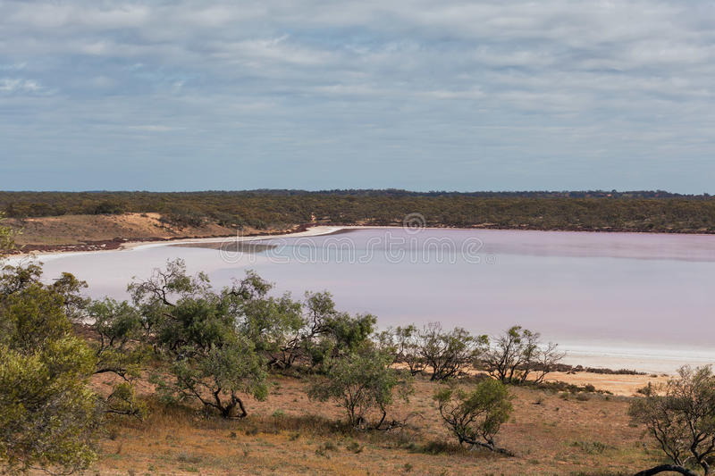 Pink salt lake Becking amongst native Australian vegetation stock photo