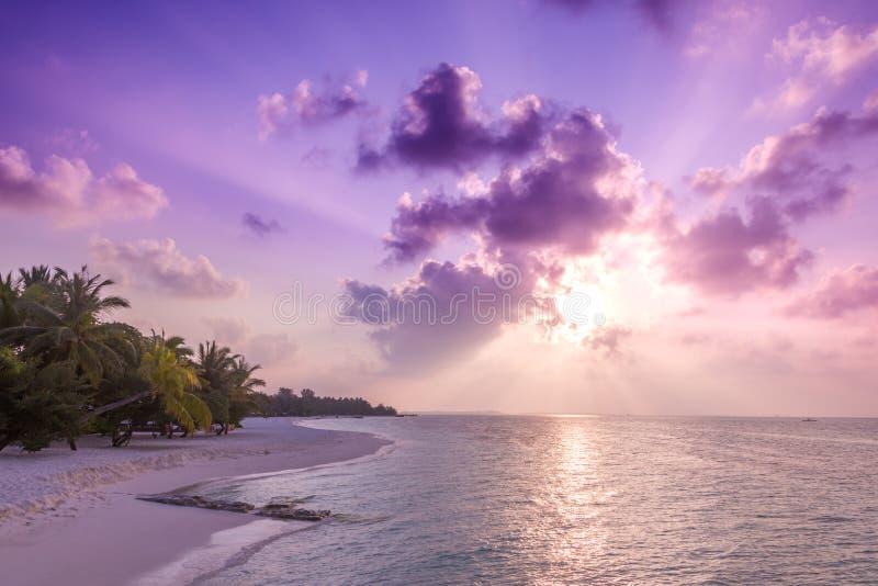 pink scallop seashell ландшафт пляжа красивейший место природы тропическое Пальмы и голубое небо Концепция летнего отпуска и кани стоковые изображения