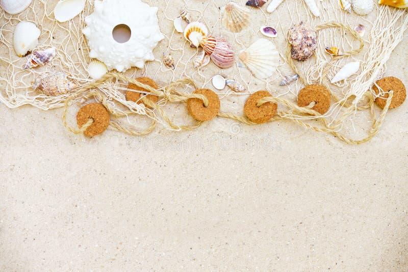 pink scallop seashell стоковое изображение