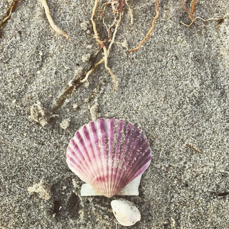 Pink shell. On a day at the beach I found this beautiful stock photo