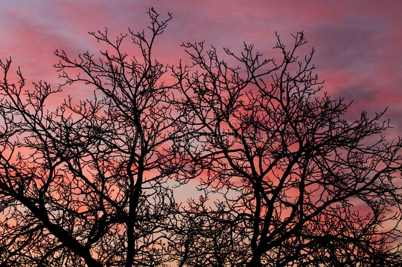 Pink skies with bare tree branches royalty free stock photography