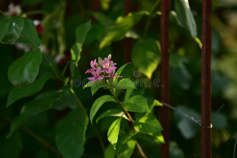 Pink small flower and tree at sunset royalty free stock photos