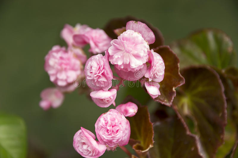 Pink small flowers stock photos