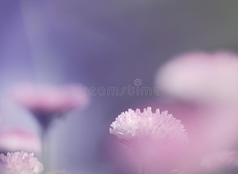 Pink soft light nature background royalty free stock photo