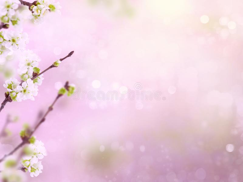 Pink spring background with bokeh and blur, flowers and cherry branches. Spring cherry blossoms flowers on a branch on blurred background with bokeh stock photos