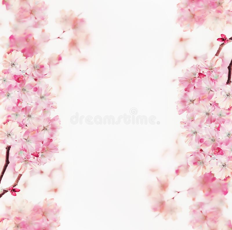 Pink spring blossom frame of cherry on white background. Floral border. Springtime nature background. Sakura blooming royalty free stock image