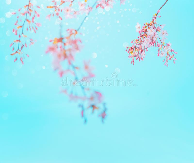 Pink spring blossom at turquoise blue sky background. Floral border. Springtime nature background stock photography