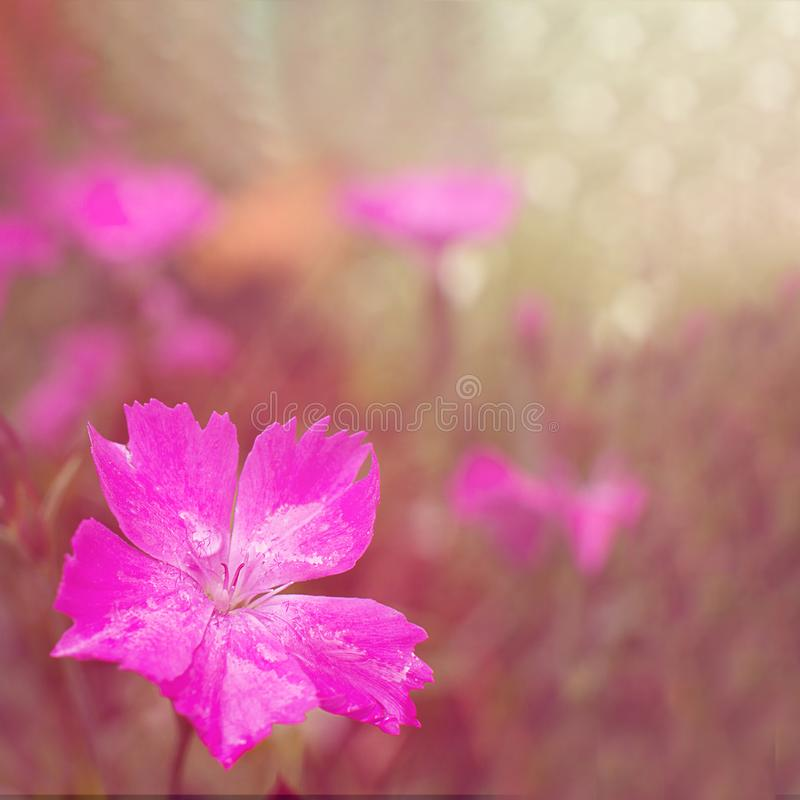 Pink spring flowers on green square blurred background macro closeup stock images