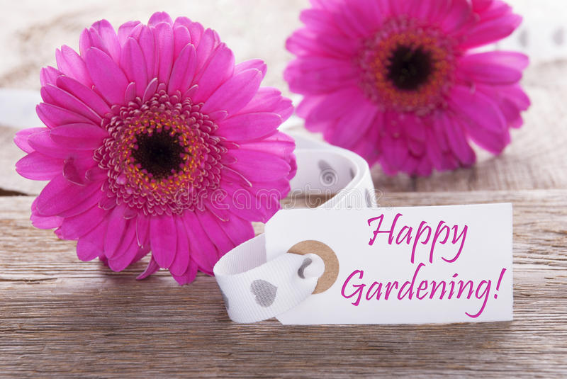 Pink Spring Gerbera, Label, Text Happy Gardening. Label With English Text Happy Gardening. Pink Spring Gerbera Blossom. Vintage, Rutic Or Aged Wooden Background stock image
