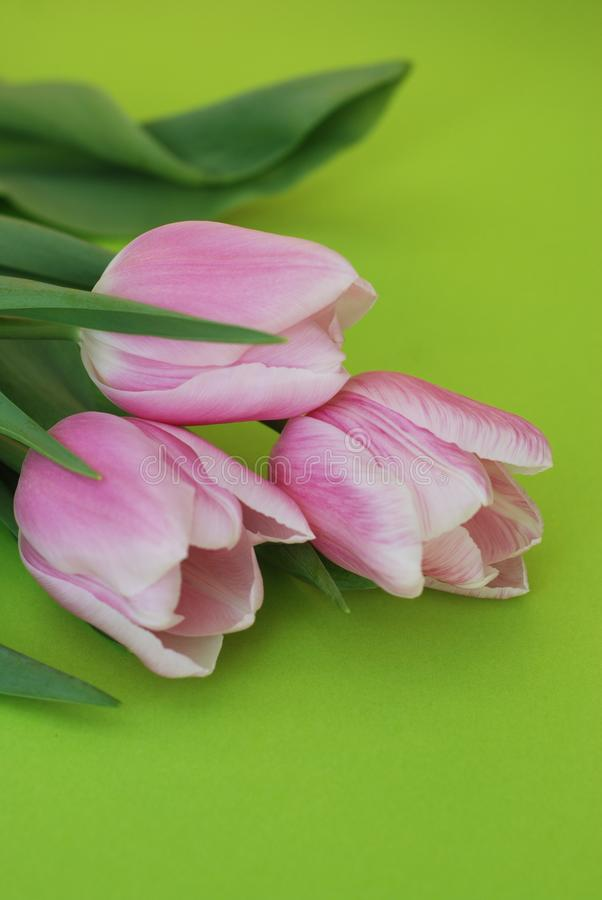 Download Pink Spring Tulips Over A Green Background, In A Flat Lay Composition With Copy Space. Spring Flowers. Vertical Image. Stock Photo - Image of holiday, blossom: 111619076