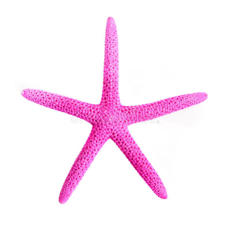 Pink starfish. Is isolated on a white background royalty free stock images