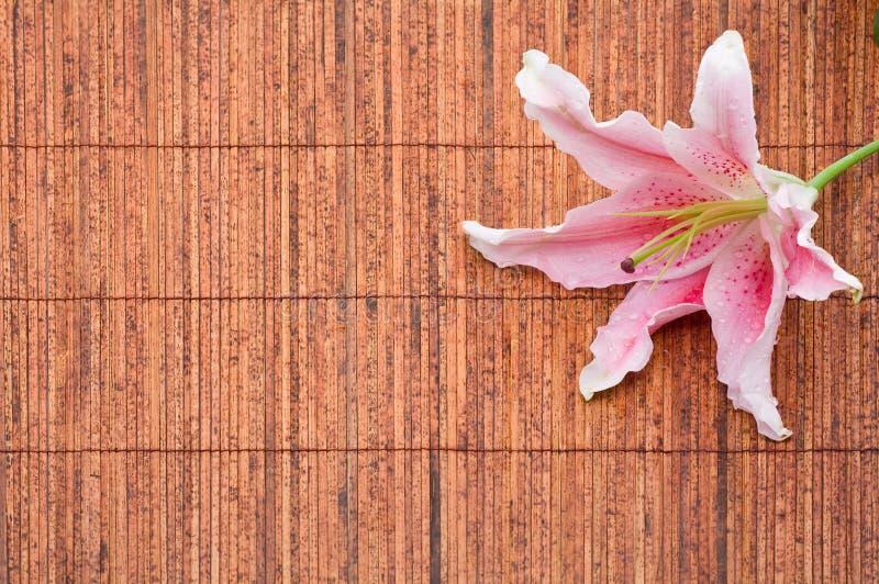 Download Pink Stargazer Lily (Lilium Stargazer) Arrangement Royalty Free Stock Photos - Image: 14837358