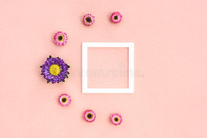 Pink strawflowers and white frame stock photo