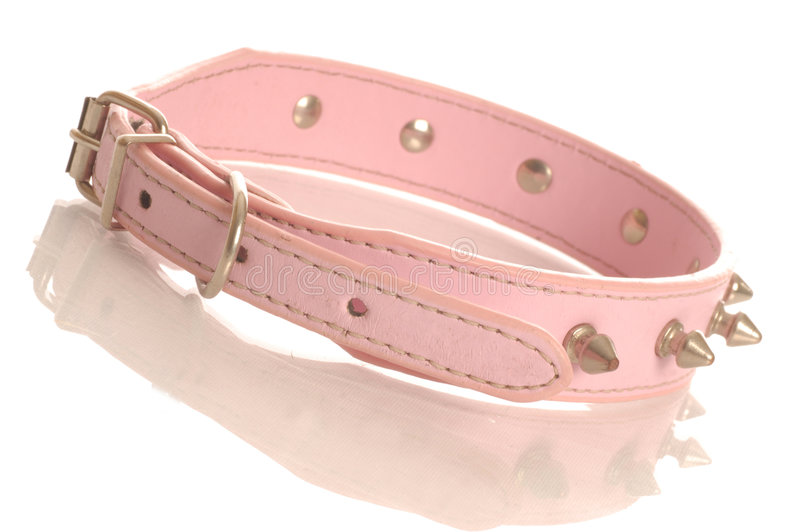 Download Pink studded dog collar stock image. Image of responsibility - 6861759