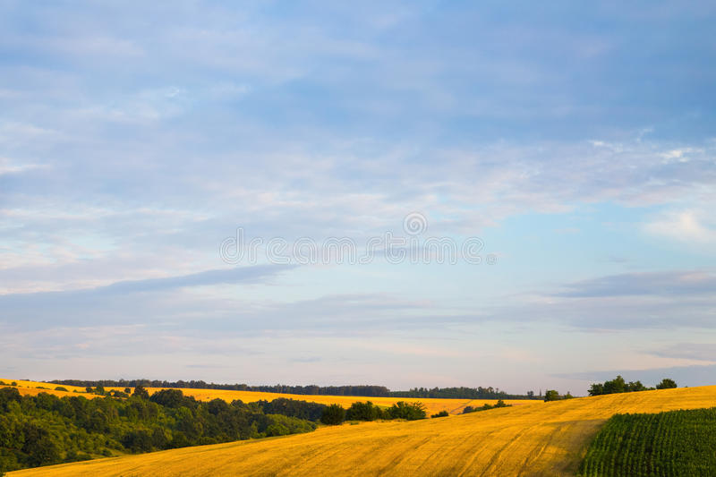 Pink sunrise or sunset over wheat or barley fields. Pink sunrise or sunset over colorful yellow harvested wheat or barley fields in an agricultural landscape of stock photos