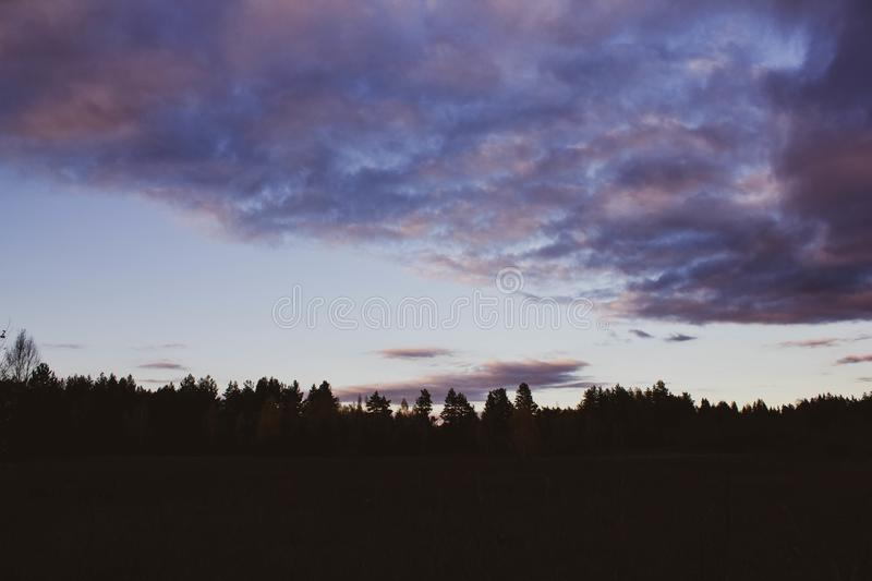 Pink sunset on the background of the silhouette of the forest. Lilac clouds in the sky at dusk. Beautiful scenery stock photography