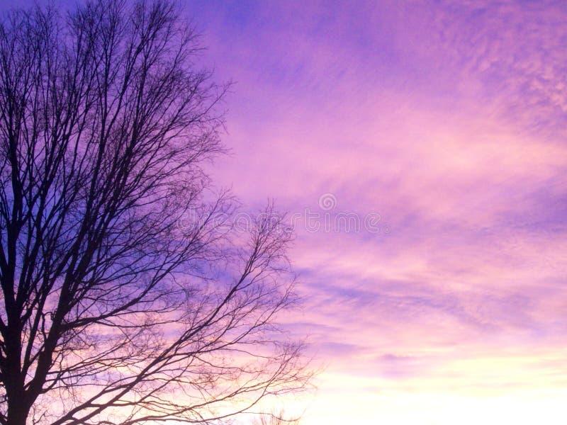 Pink Sunset stock photo