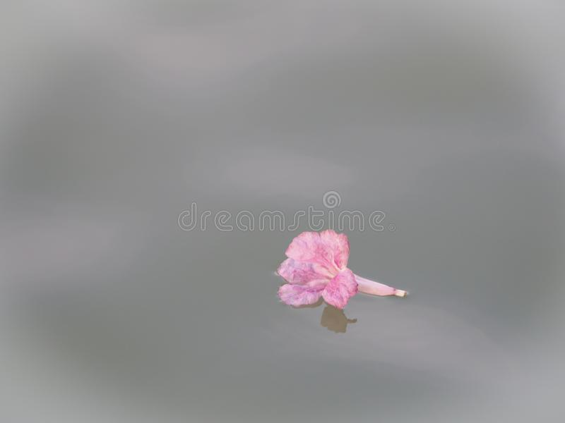 Pink Tabebuia flower that flow follow with water. stock photography