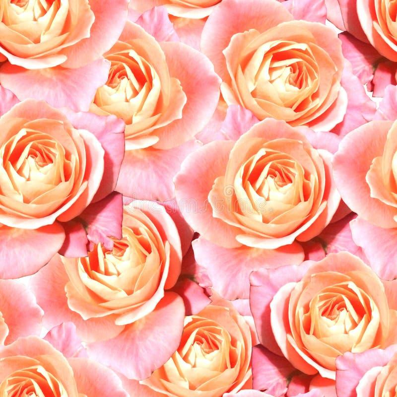 Pink tea rose flower floral seamless pattern texture.  vector illustration
