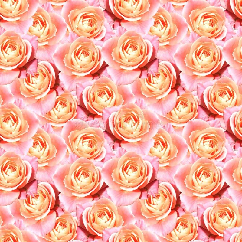 Pink tea rose flower floral seamless pattern texture.  stock illustration