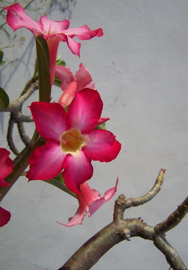 Pink trumpet flower vertical stock image image of blue lovely download pink trumpet flower vertical stock image image of blue lovely 70271515 mightylinksfo