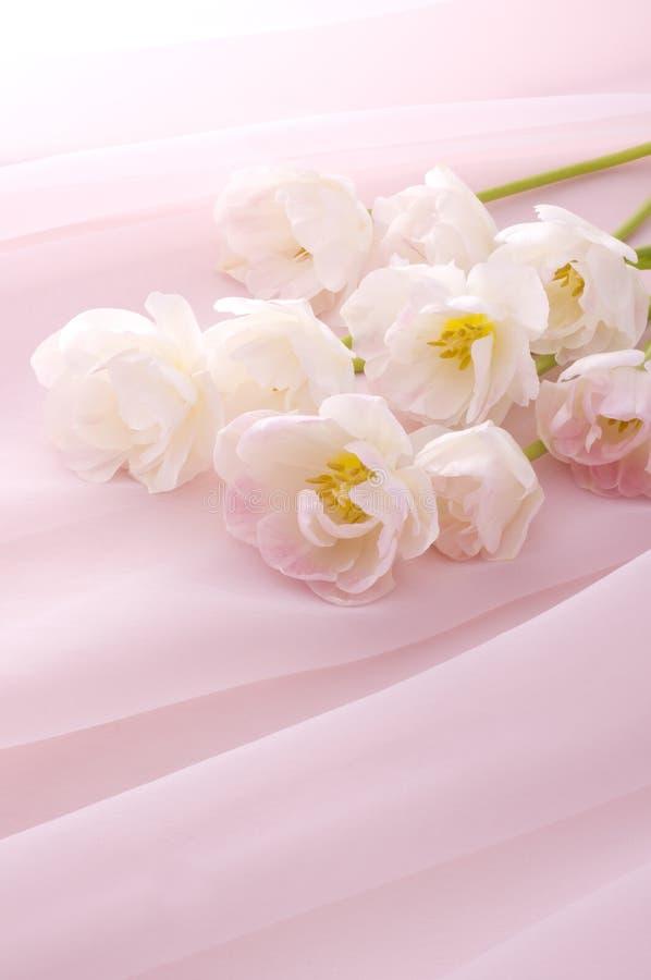 Pink Tulip Bouquet Stock Image