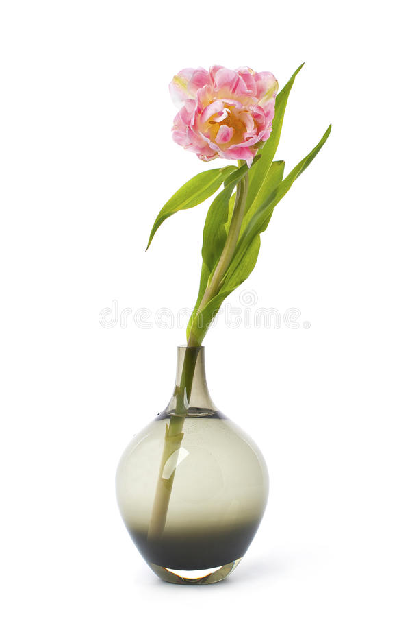 Free Pink Tulip Flower In A Black Glass Vase. Royalty Free Stock Images - 71357399