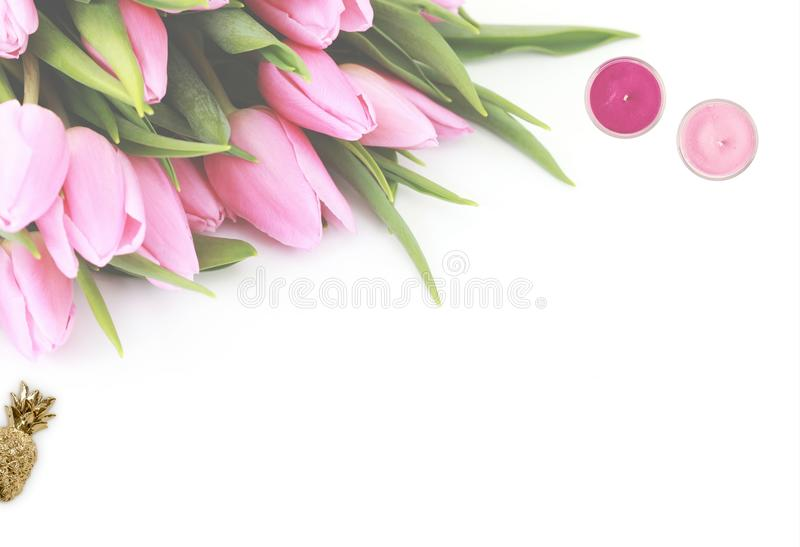 Pink Tulip Flowers With White Background stock images