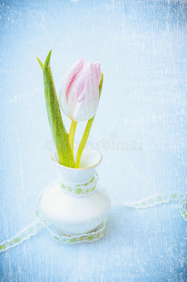 Pink tulip in vase with ribbon on blue textured background, romantic vintage royalty free stock photography