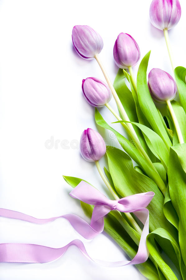 Download Pink tulips stock photo. Image of botanical, copy, spring - 13654400