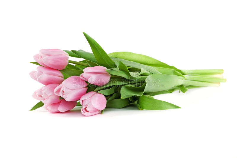 Download Pink tulips stock photo. Image of nobody, pink, valentines - 23358794