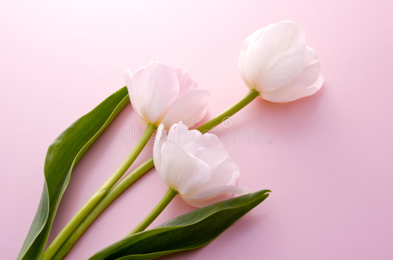 Download Pink Tulips Stock Photos - Image: 26152503