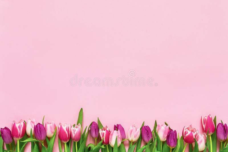 Pink tulips border on pink background. Copy space, top view. Holiday background. Mothers Day, Birthday, International Womens Day, Valentines Day concept royalty free stock images