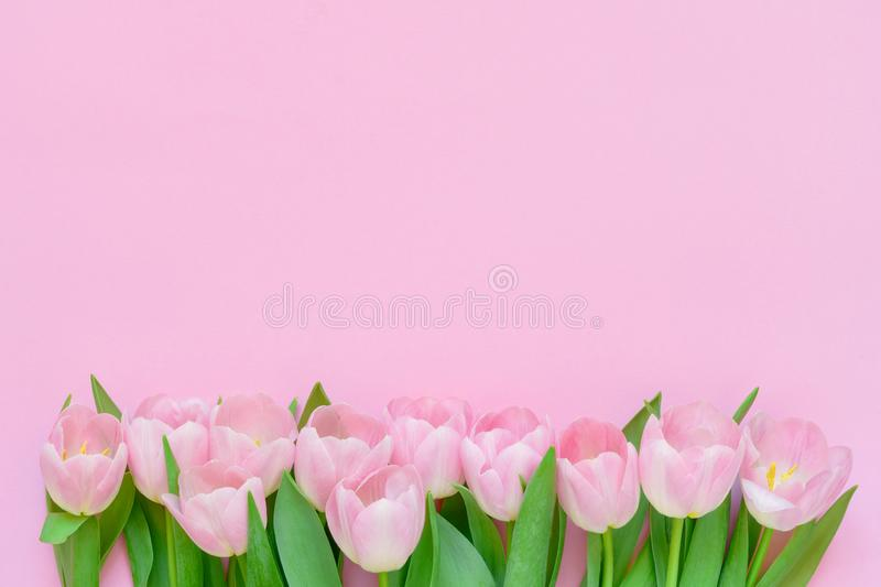 Pink tulips border on pink background. Copy space, top view. Holiday background. Flat lay of International Women`s Day, Valentines Day, birthday, Mothers Day royalty free stock image