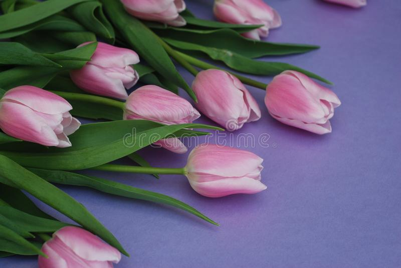 Download Pink Tulips Bouquet, Over Purple Background With Copy Space. Top View. Flat Lay. Spring Time. Stock Image - Image of copy, bunch: 111619047