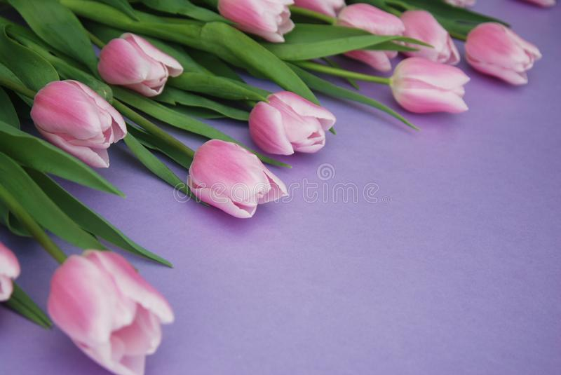 Download Pink Tulips Bouquet, Over Purple Background With Copy Space. Top View. Flat Lay. Spring Time. Stock Photo - Image of event, leaf: 111619064