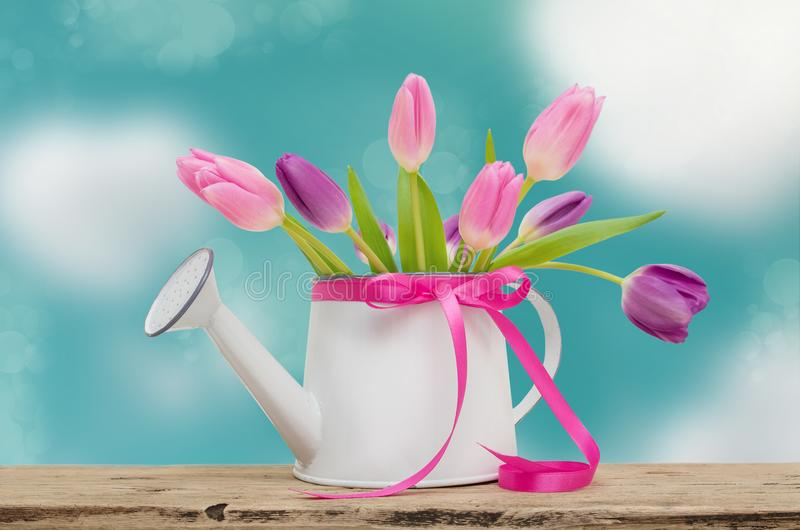 Pink tulips garden watering can and ribbon on background of blue sky with clouds stock image